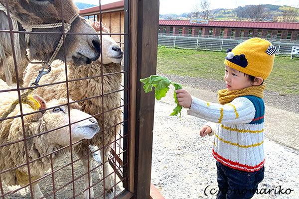 バブーとプチモンスターの小さな休日「酪農王国オラッチェ」_c0024345_11412416.jpg