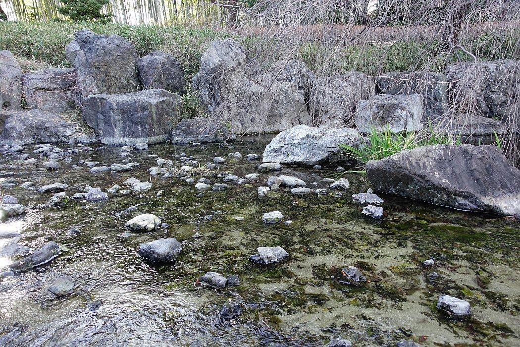 白鳥庭園(その2)_c0112559_08392715.jpg