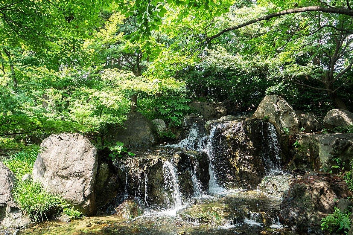 白鳥庭園(その2)_c0112559_08423130.jpg
