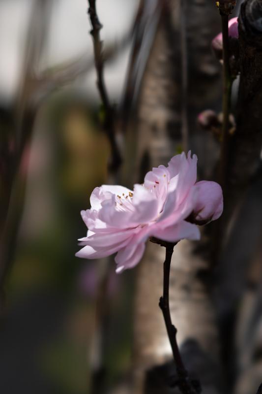 ピンクの花_a0261169_23422832.jpg