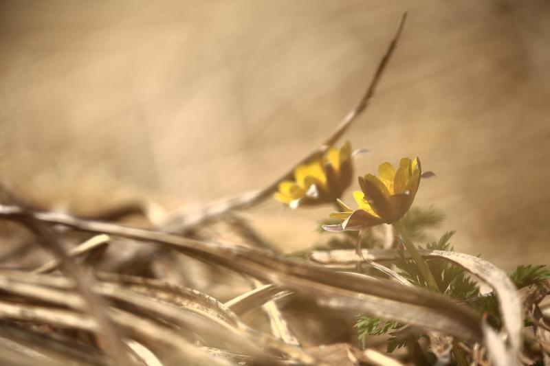 春の出遭い_f0075075_17382800.jpg