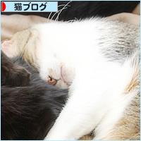 ノロ、再び・・・_a0389088_10590643.jpg