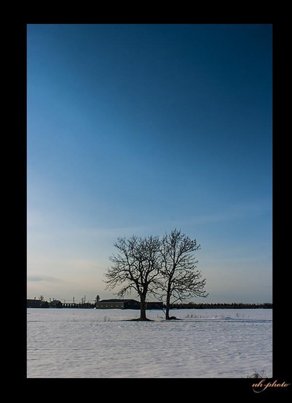 久々の雪の中のツインツリー_b0181889_04584051.jpg