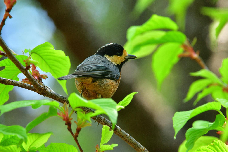 奄美大島:与路島の野鳥 ⑫_e0362696_16390898.jpg