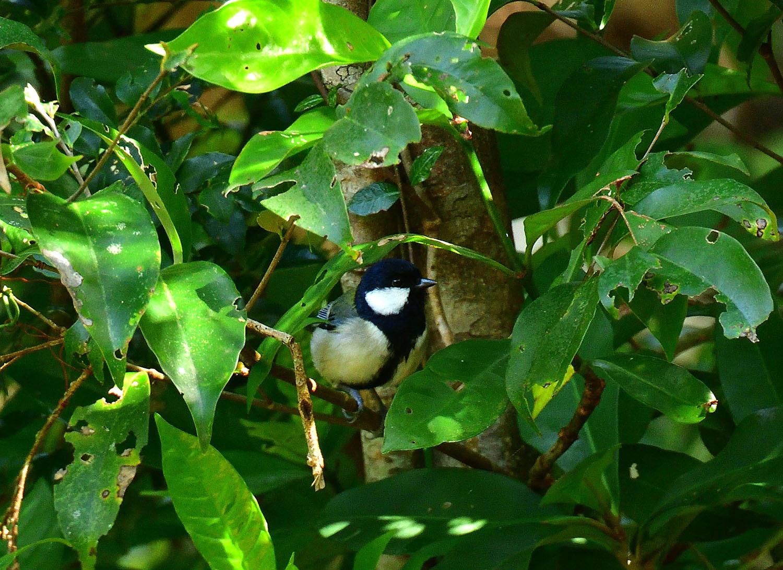 奄美大島:与路島の野鳥 ⑫_e0362696_16392520.jpg