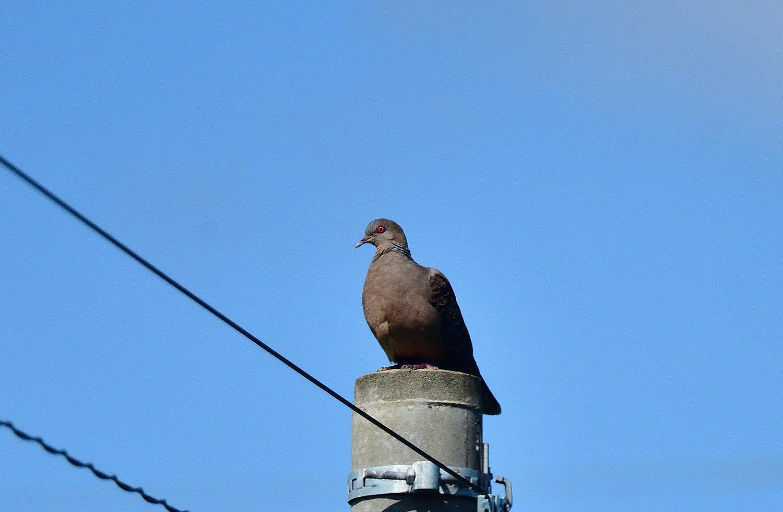 奄美大島:与路島の野鳥 ⑫_e0362696_16393073.jpg