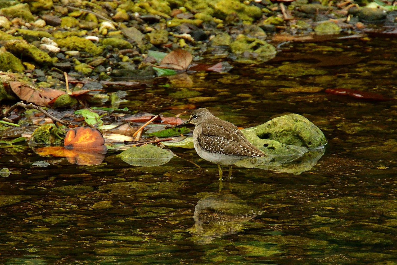 奄美大島:与路島の野鳥 ⑫_e0362696_16395812.jpg