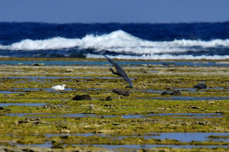 奄美大島:与路島の野鳥 ⑫_e0362696_16403242.jpg