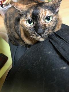 今月中は、保護猫カフェはお休みです。_d0171907_10434461.jpg