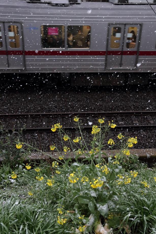 東武ワールドスクウェアを背景に汽車が走る - 2020年早春・東武鬼怒川線 -_b0190710_19100530.jpg