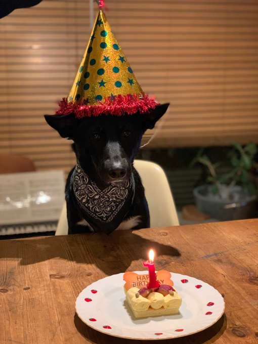 一歳の誕生日おめでとう!P-we!_d0106911_00180672.jpg