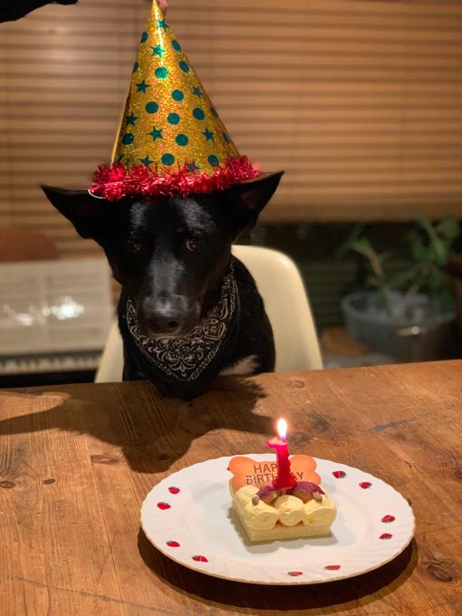 一歳の誕生日おめでとう!P-we!_d0106911_00184561.jpg