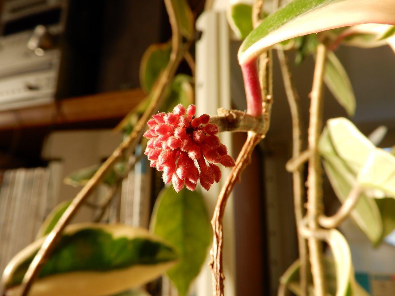 コーヒーの花が咲く春_c0025115_23195022.jpg