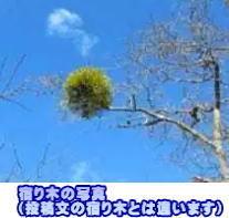 投稿)春の散歩_d0070316_14115889.jpg