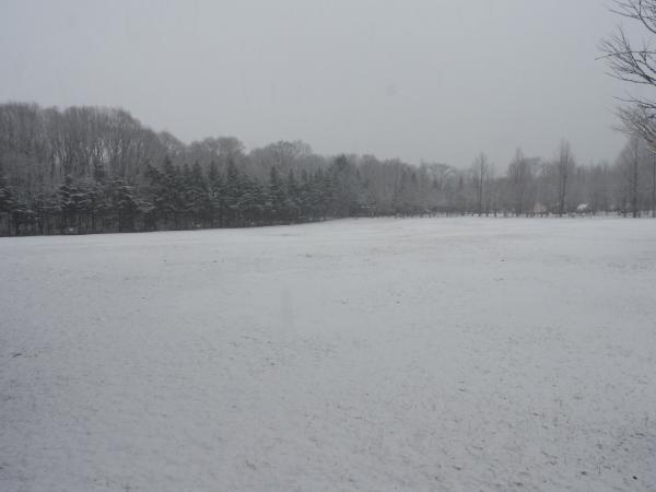 雪が降りました。ノーマルタイヤ危険!(2020年3月14日)_b0174425_08563689.jpg
