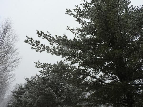 雪が降りました。ノーマルタイヤ危険!(2020年3月14日)_b0174425_08564860.jpg