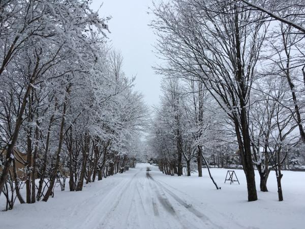 雪が降りました。ノーマルタイヤ危険!(2020年3月14日)_b0174425_18142927.jpg