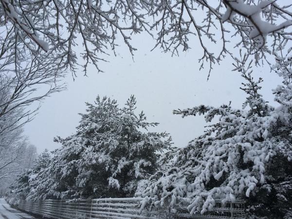 雪が降りました。ノーマルタイヤ危険!(2020年3月14日)_b0174425_18143504.jpg