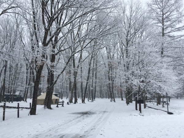 雪が降りました。ノーマルタイヤ危険!(2020年3月14日)_b0174425_18145941.jpg