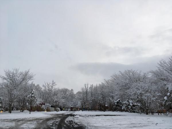 雪が降りました。ノーマルタイヤ危険!(2020年3月14日)_b0174425_18164057.jpg