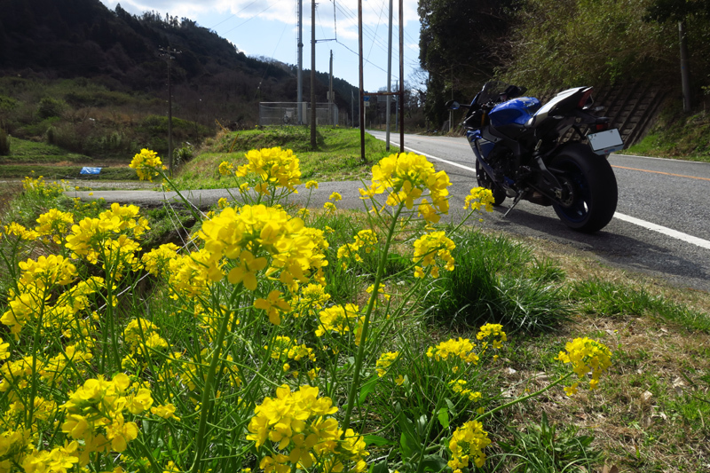 春の房総ツーリング (YZF-R1)_f0126932_18285944.jpg