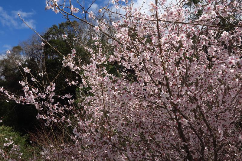 春の房総ツーリング (YZF-R1)_f0126932_18300358.jpg