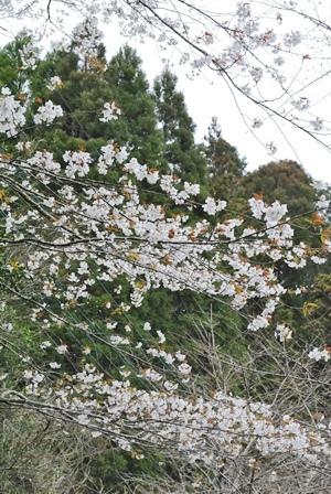 春をお届け💛_a0123836_11230227.jpg
