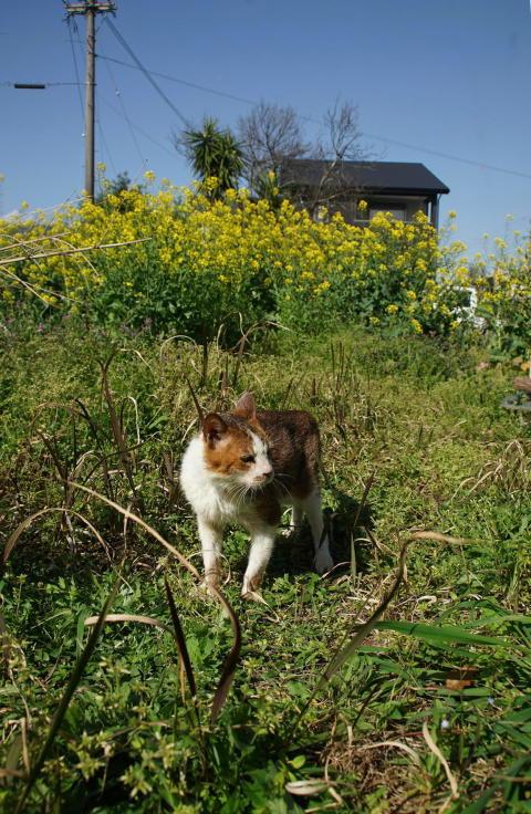 菜ノハナの花咲く畑で #2_b0060239_15350666.jpg