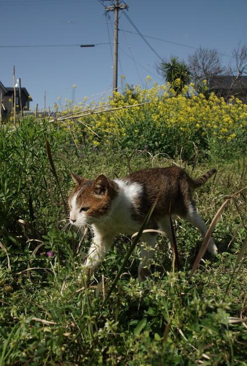 菜ノハナの花咲く畑で #2_b0060239_15352211.jpg