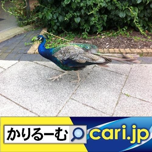超簡単!手作りマスクの作り方 cari.jp_a0392441_15355917.jpg