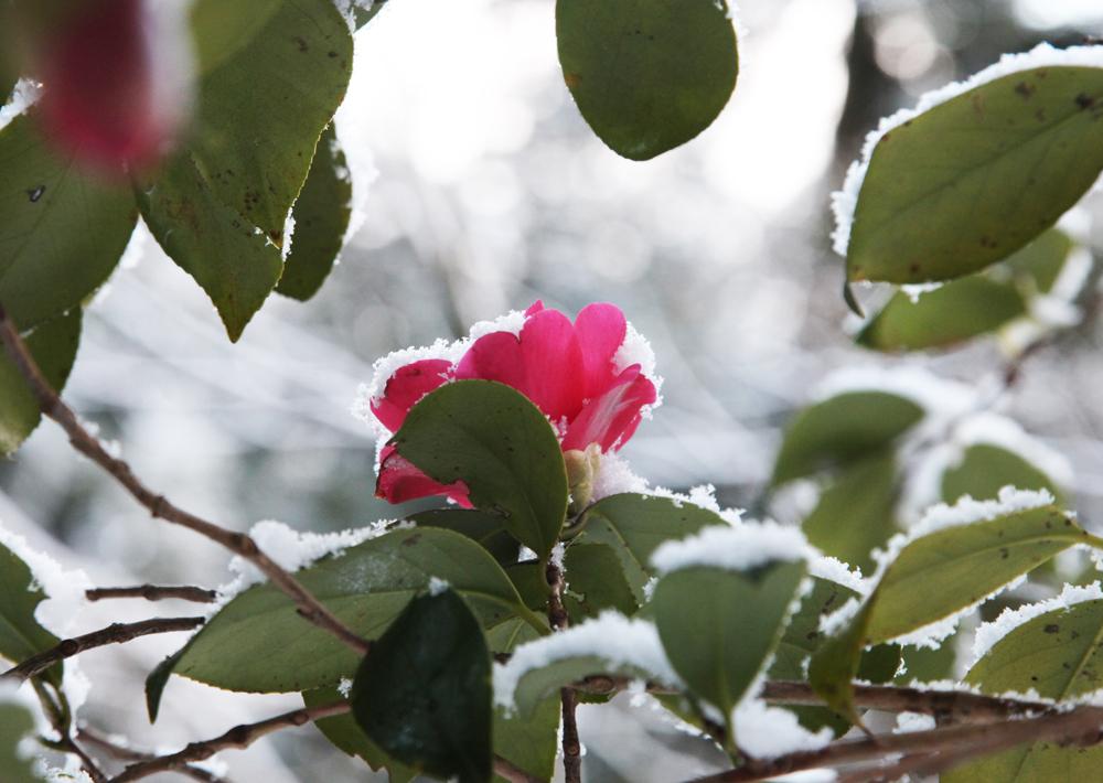 宇陀市 戒長寺 雪景色_c0108146_23163312.jpg