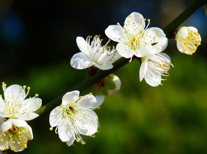 早春の里山を行く  2020-03-16 00:00_b0093754_21285782.jpg