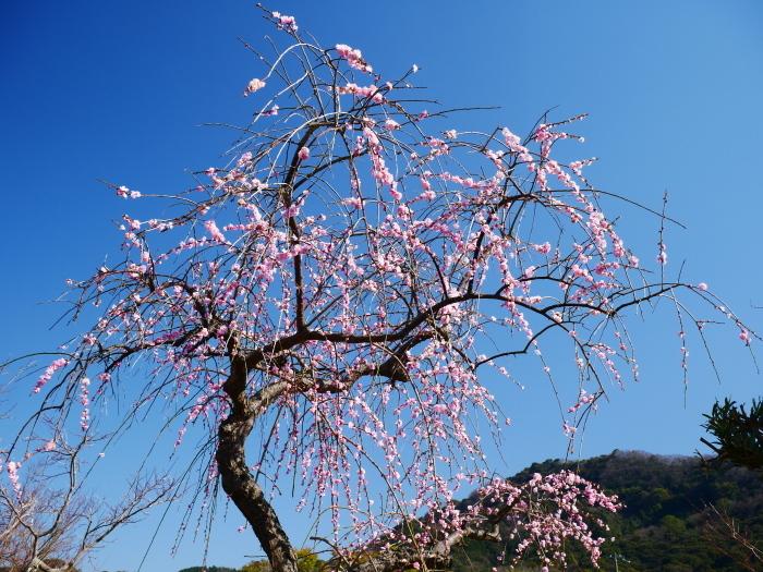 早春の里山を行く  2020-03-16 00:00_b0093754_21304051.jpg