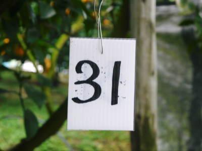デコポン(肥後ポン) 熊本限定栽培品種の『ひのゆたか』2020年分完売間近!ご注文はお急ぎ下さい!_a0254656_19010160.jpg