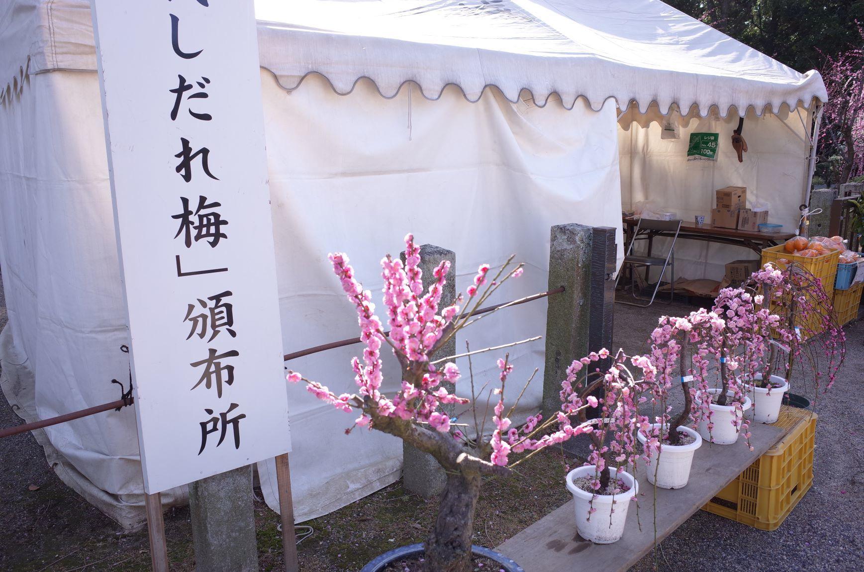 梅は咲いたか_d0389370_18122352.jpg
