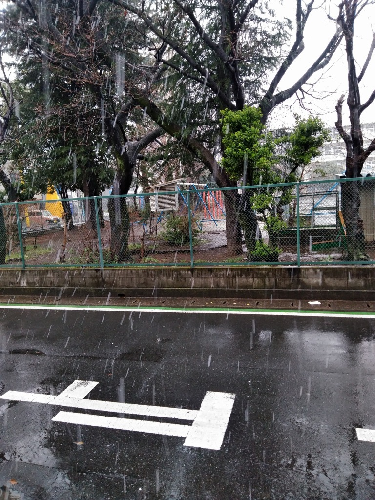 雪と同時に開花宣言_d0061678_16330062.jpg
