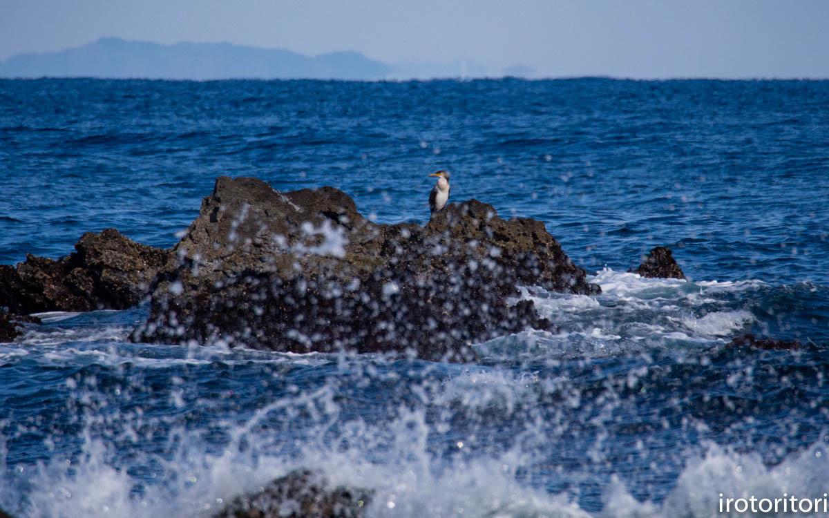 波と鳥 (カワウ他)  2020/03/12_d0146592_22522582.jpg