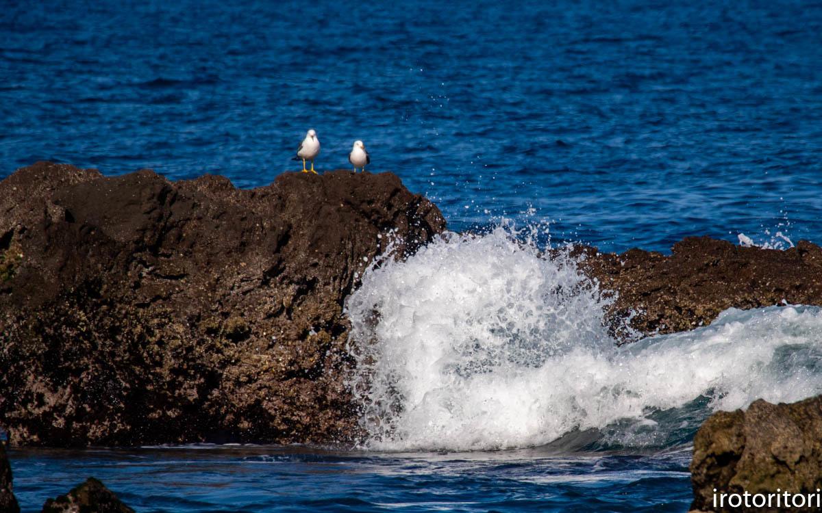 波と鳥 (カワウ他)  2020/03/12_d0146592_22534640.jpg