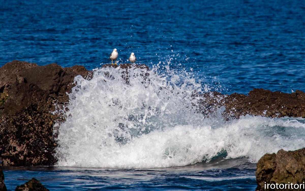 波と鳥 (カワウ他)  2020/03/12_d0146592_22535662.jpg