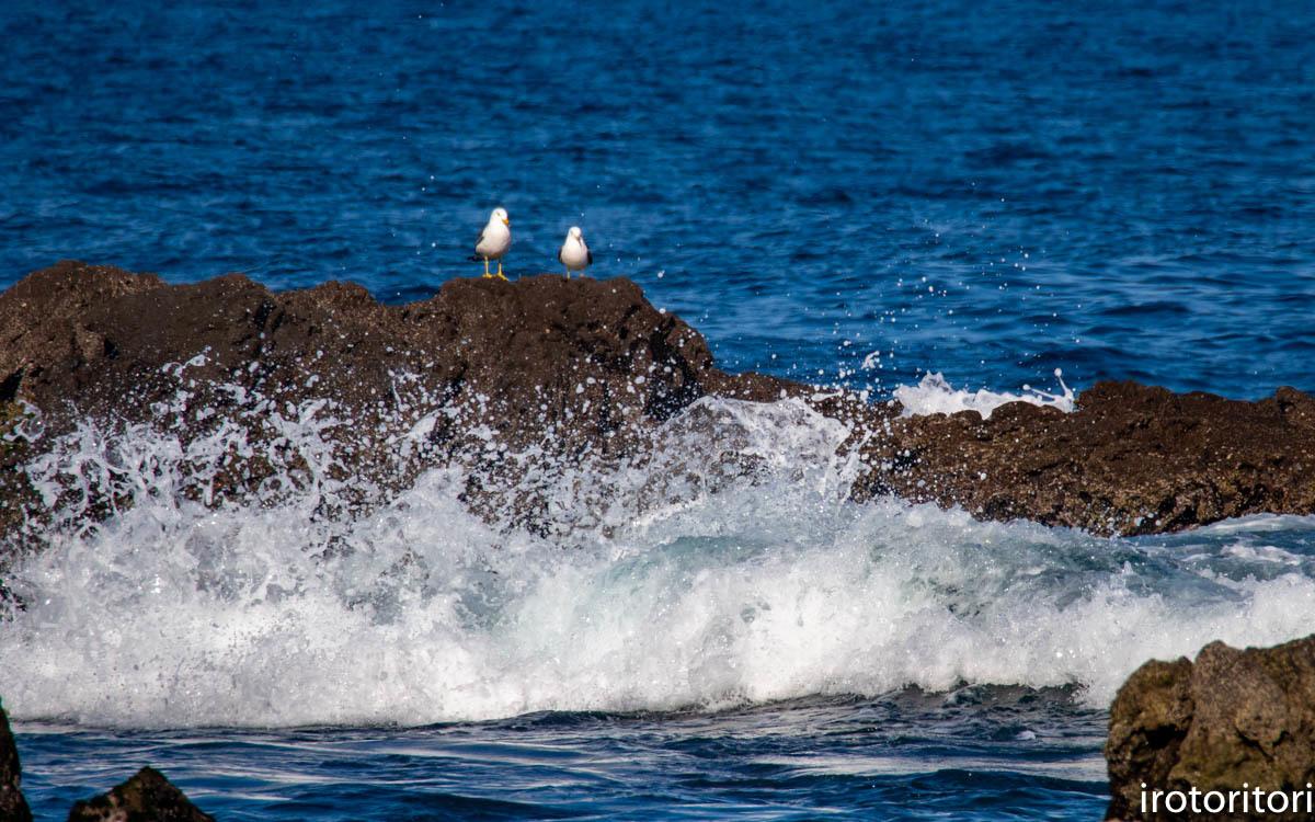 波と鳥 (カワウ他)  2020/03/12_d0146592_22540608.jpg