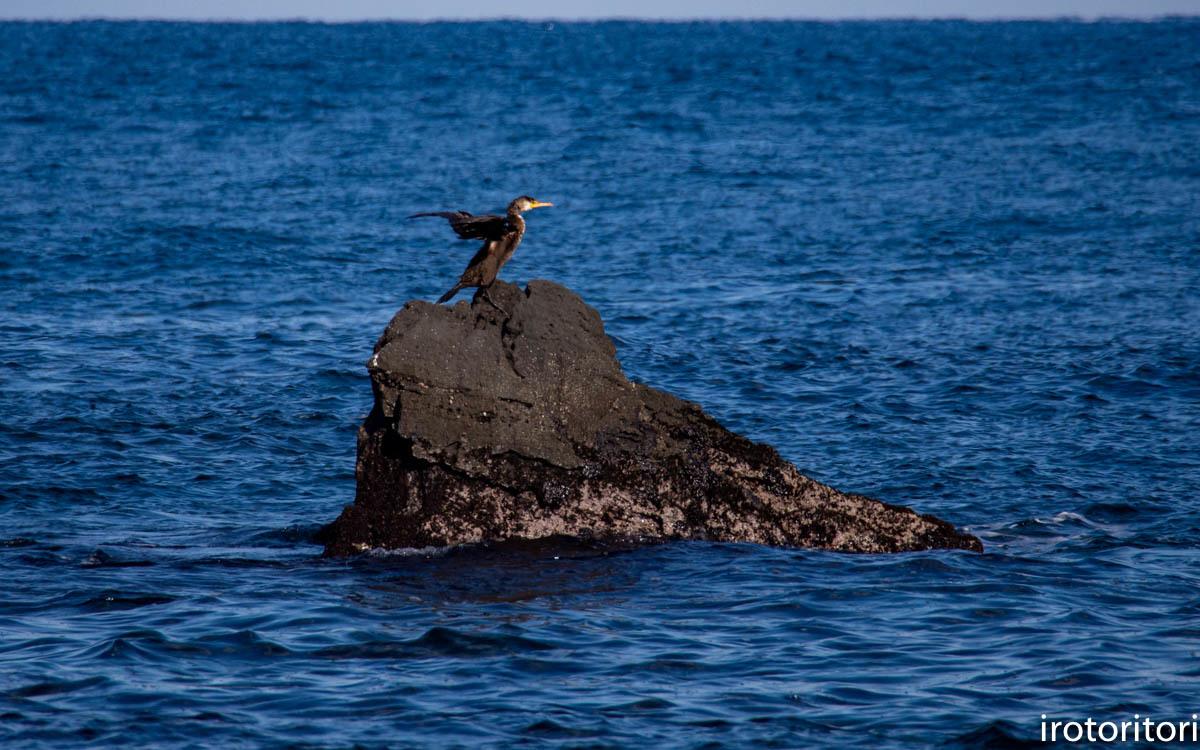 波と鳥 (カワウ他)  2020/03/12_d0146592_22552273.jpg