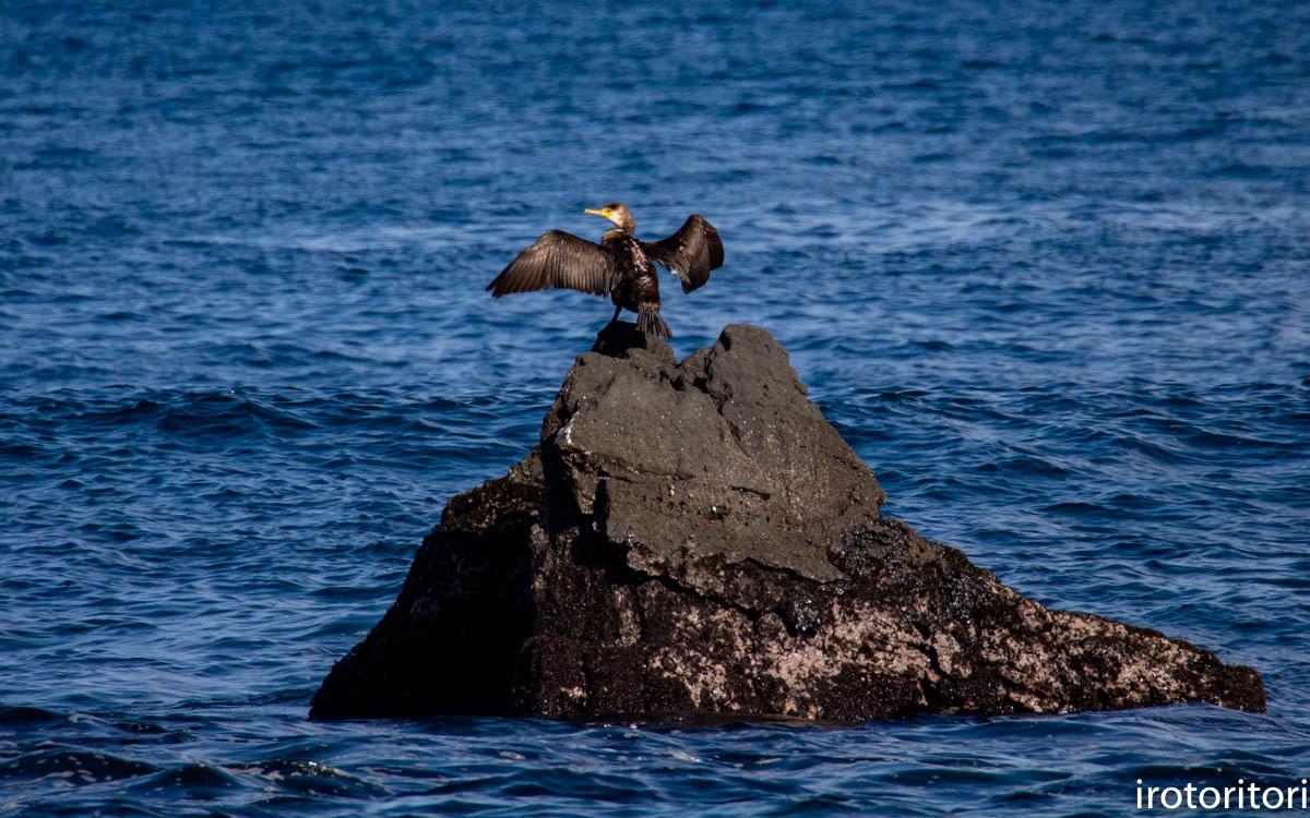 波と鳥 (カワウ他)  2020/03/12_d0146592_22561370.jpg