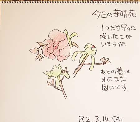 今日の華晴苑_b0364195_09104939.jpg