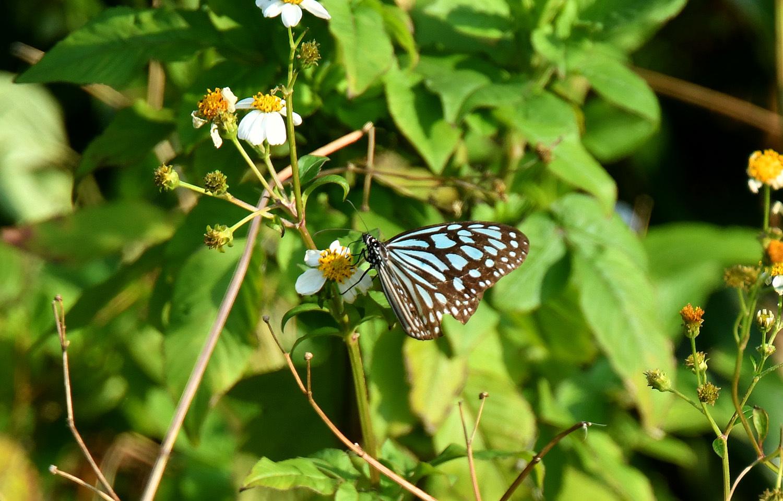奄美大島:与路島の蝶々&旅行 ⑬_e0362696_15534020.jpg
