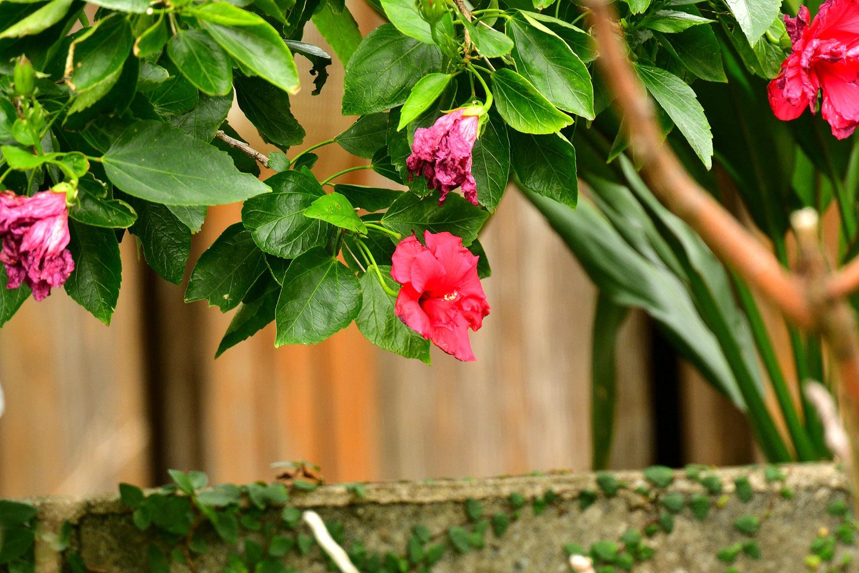 奄美大島:与路島の蝶々&旅行 ⑬_e0362696_15543323.jpg