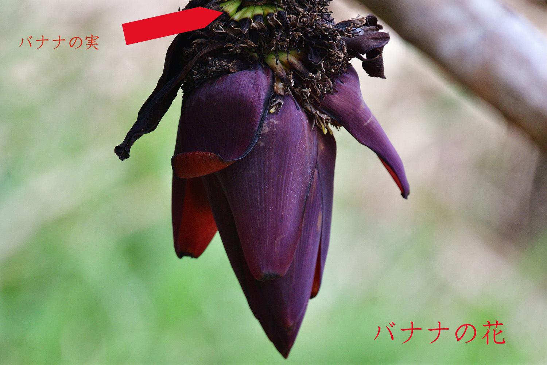 奄美大島:与路島の蝶々&旅行 ⑬_e0362696_15543661.jpg