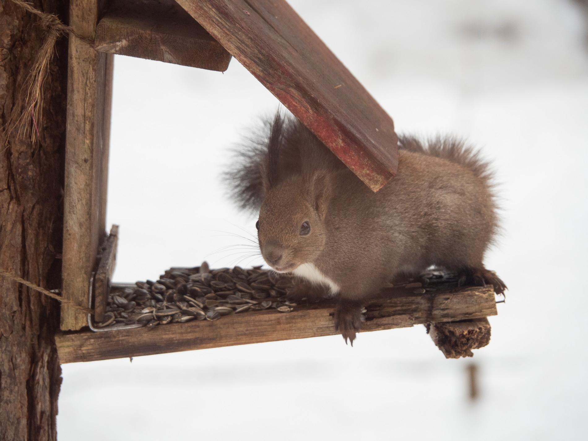 """エゾリス君も驚きます・・春を告げる""""屋根からの落雪""""_f0276498_21351796.jpg"""