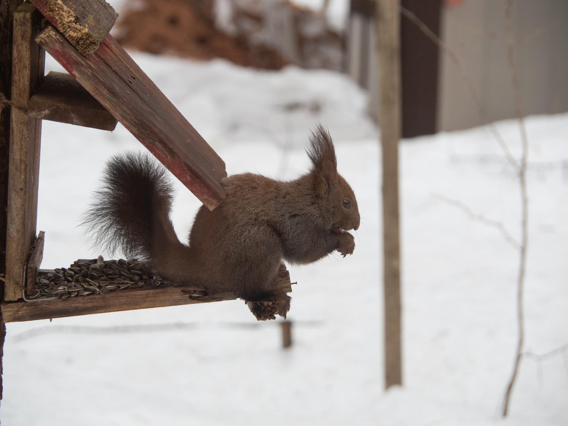 """エゾリス君も驚きます・・春を告げる""""屋根からの落雪""""_f0276498_21361160.jpg"""