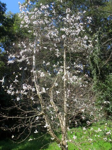 ■「一億総自粛」下の福岡市動植物園での花見、そして加藤典洋詩「パジャマと私」_d0190217_15531848.jpg
