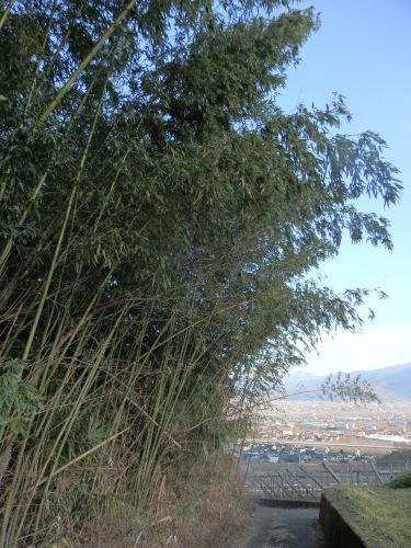 竹やぶの管理_f0325525_17400122.jpeg